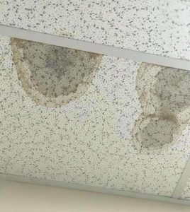 Mold in commercial ceiling tiles Richmond VA